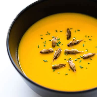 cuisiner les insectes elevage français d 39 insectes comestibles micronutris com