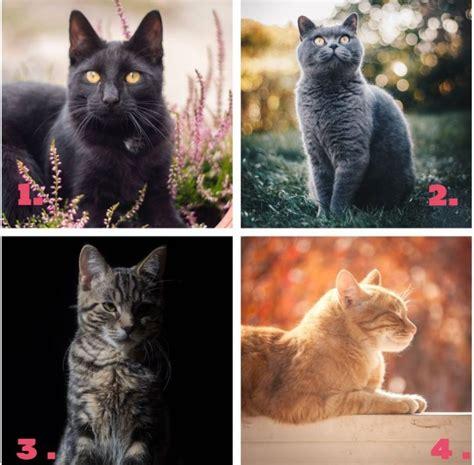 TESTS: izvēlies kaķi un uzzini, kādas attiecības tevi var ...