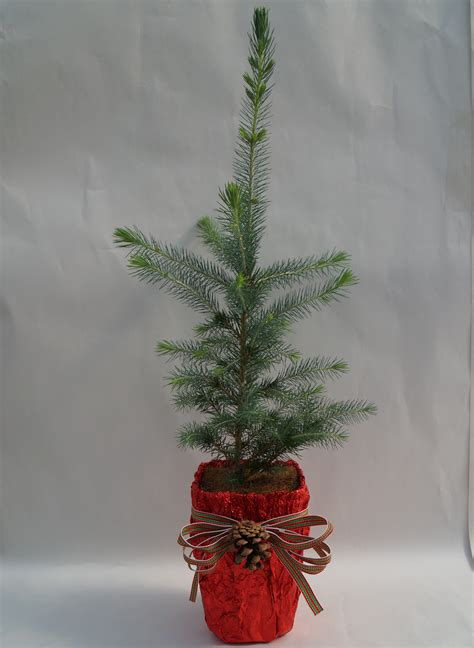 small live status on christmas small tree
