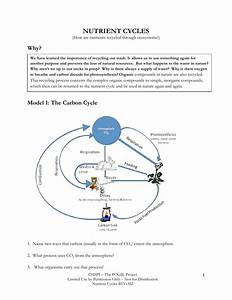 Worksheet  The Carbon Cycle Worksheet  Worksheet Fun