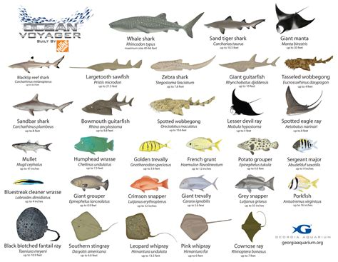 aquarium fish names  images  aquarium ideas