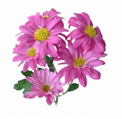 Bouquets Fleurs Tubes Flower Fleur Margaretki Magnolia