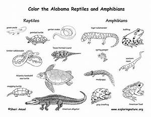 Gallery For > Reptiles Pictures And Names