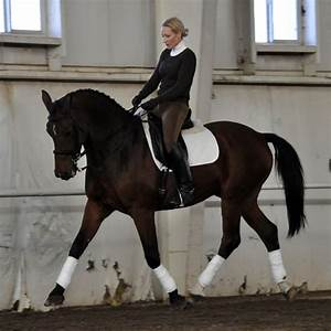 17 Best images about The ART of classical dressage on ...