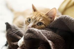 Wie Fange Ich Eine Katze : freitagspost wie eine katze das leben ndert ~ Markanthonyermac.com Haus und Dekorationen