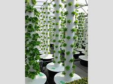 Local Tower Garden Farmer Produces Aeroponic Food for