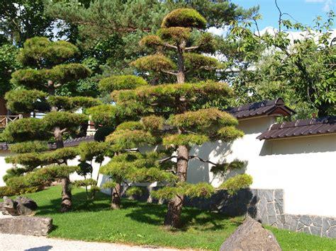 Japanischer Garten Events by Japanischer Garten Foto Bild Pflanzen Pilze