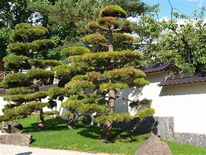 Pflanzen Japanischer Garten : japanischer garten foto bild pflanzen pilze ~ Lizthompson.info Haus und Dekorationen