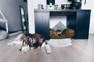 Haustiere Für Die Wohnung : diy hundeh tte f r die wohnung selber bauen inklusive praktischem stauraum ~ Frokenaadalensverden.com Haus und Dekorationen