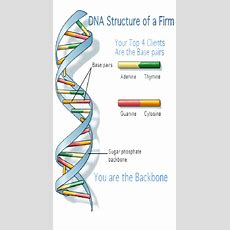Do You Know Your Top Client Dna Structure? You Should!  Ericdonner's Blog