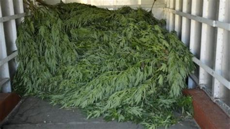 plantation cannabis exterieur en pot 28 images autoproduction de cannabis en ext 233 rieur