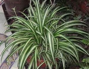 Trockene Luft Im Schlafzimmer : 10 pflanzen f r das schlafzimmer die deine gesundheit und ~ Lizthompson.info Haus und Dekorationen