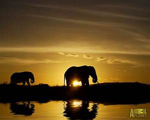 beautiful, pictures, of, elephant, in, hd