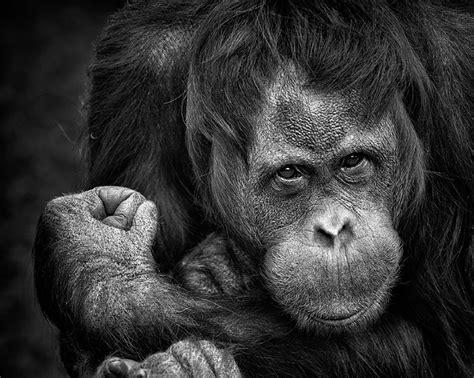 Black and White Face Monkey