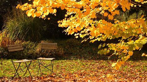 Garten Im Herbst Was Tun by Herbst Im Garten Was Jetzt Zu Tun Ist