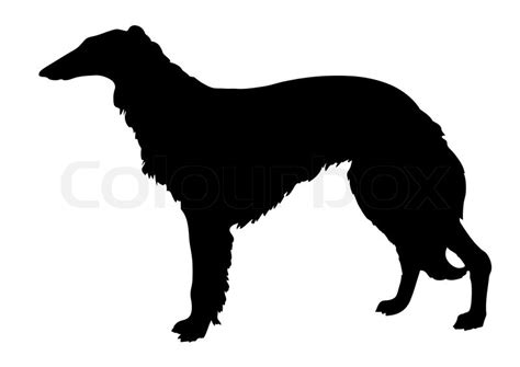 vector silhouette collie  white background stock