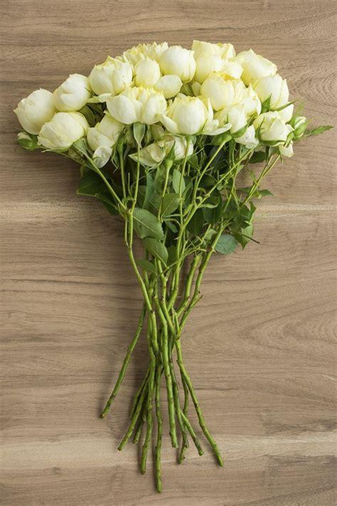 creamy white spray garden rose