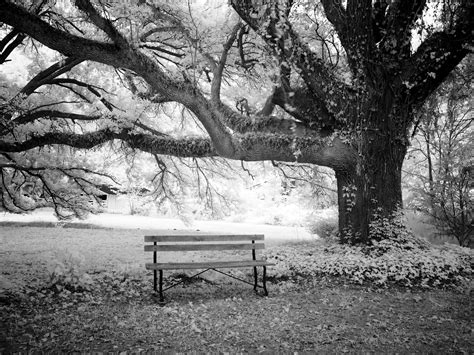 panchina parco foto gratis panchina parco albero immagine