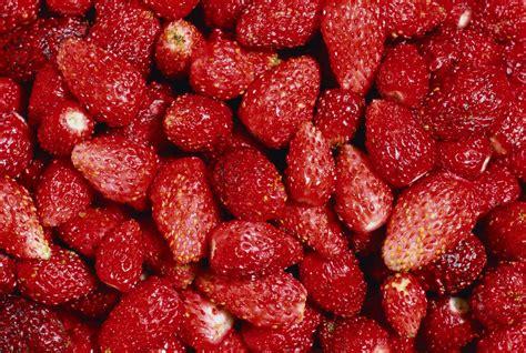 fondos de frutas texturas fruit