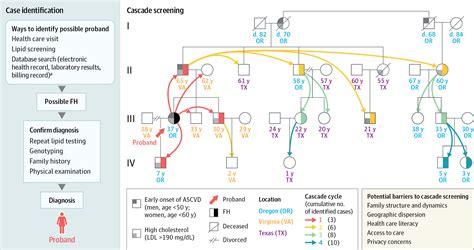 cascade screening  familial hypercholesterolemia