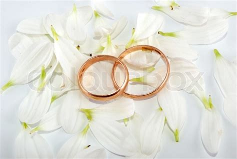 wedding rings  flowers composition white petals
