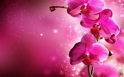 Orchid Flowers Fanpop Hipwallpaper