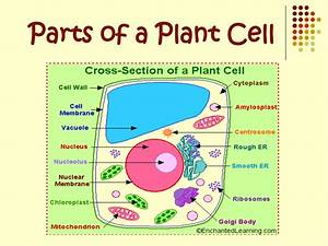 Picture Of Plant Cells