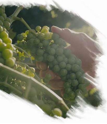 Winery Raeburn Heart