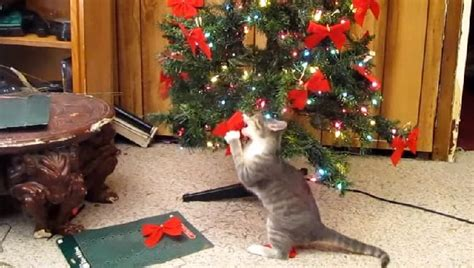 cats  love christmas trees  cattime