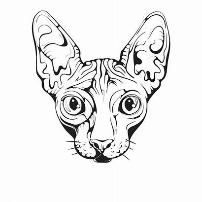 Cat Sphynx Drawing Egyptian Clipart Cats Library