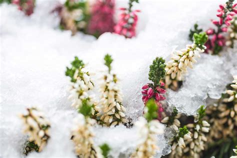 fiori per esterno invernali fiori da giardino invernali free piante e fiori da