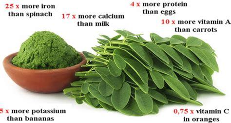 breaking study  green herb    cure