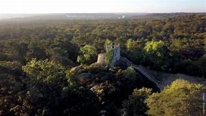 The Forest - Fontainebleau Tourisme