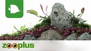 Wohncontainer Zu Verschenken : aquarium deko ideen ohne wasser wohn design ~ Jslefanu.com Haus und Dekorationen