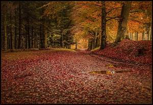 Forest, Leaves, Trees, Rain, Fall, Path, Road, Nature, Landscape, Wallpapers, Hd, Desktop, And