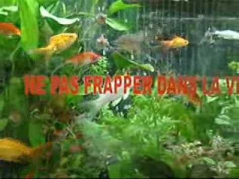 aquarium de poissons d eau froide wmv