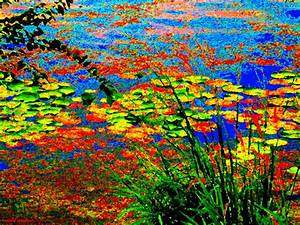 Glorious Water Lilies Banks Of The Lachine Canal Montreal