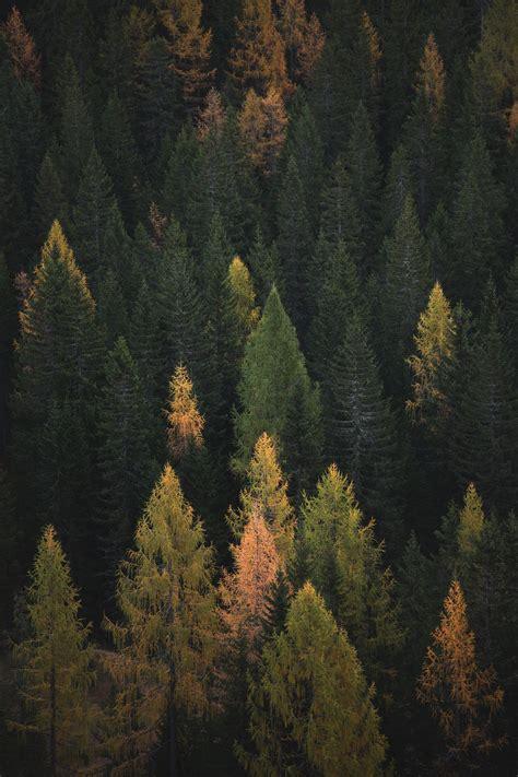 gambar ekosistem alam berdaun lebar beriklim  hutan