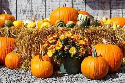Harvest Fall Display Pumpkin Area Houston Take