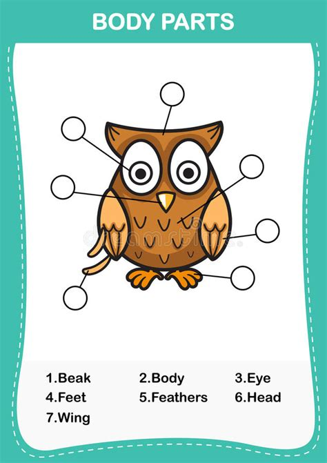 illustration  owl vocabulary part  body stock vector