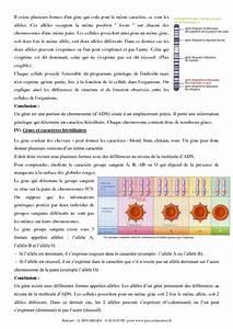 Information G U00e9n U00e9tique  U2013 3 U00e8me  U2013 Cours  U2013 Svt