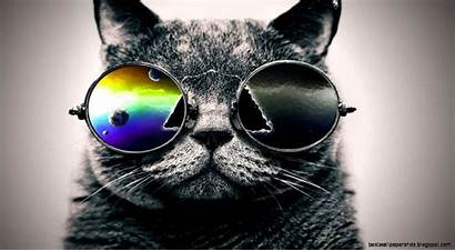 Cool Cat Wallpapers Background Computer Flipped
