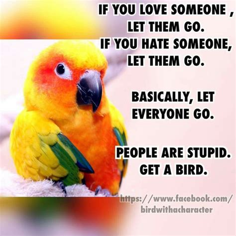 Meme Bird - 116 best bird memes and quotes images on pinterest pet birds parakeets and parrots