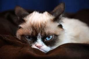 grumpy cat grumpy kitty hd wallpapers