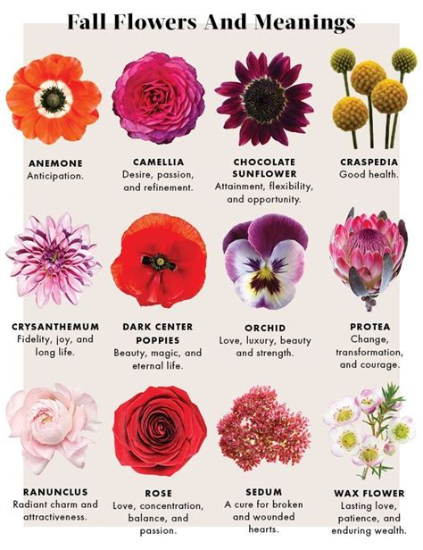 flower color meanings learn the meanings of fall flowers sacred flowers and