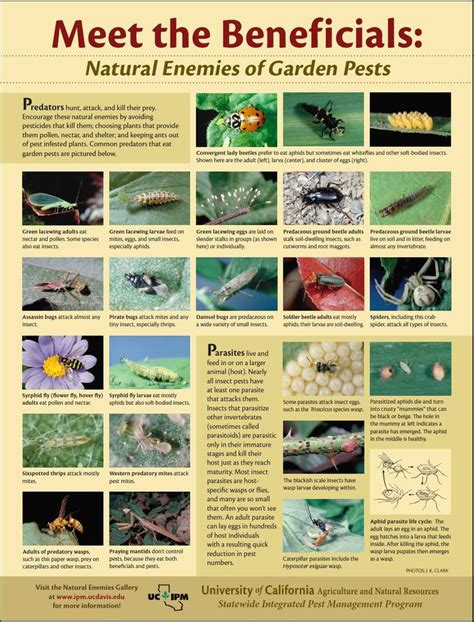 1000 images about gardening pests plant diseases and