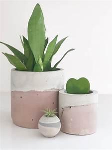 5, Ways, To, Help, Your, Indoor, House, Plants, Thrive