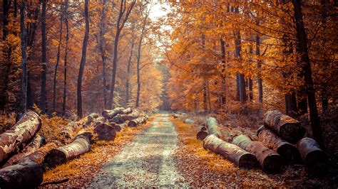 Autumn Wallpapers 4k 4k autumn wallpapers high quality free