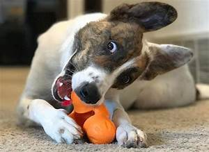dog chew toys for aggressive chewers wow blog With best dog chews for heavy chewers