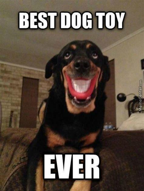 The Dog Meme - smile dog memes image memes at relatably com